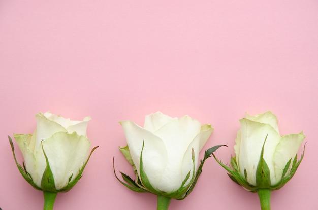 Biała róża kwiaty widok z góry na różowym tle.