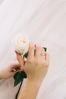 Biała róża z welonem ślubnym