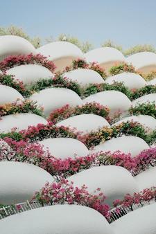 Białe balkony z kwiatami