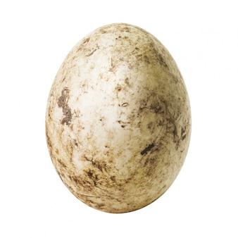 Białe brudne jajko