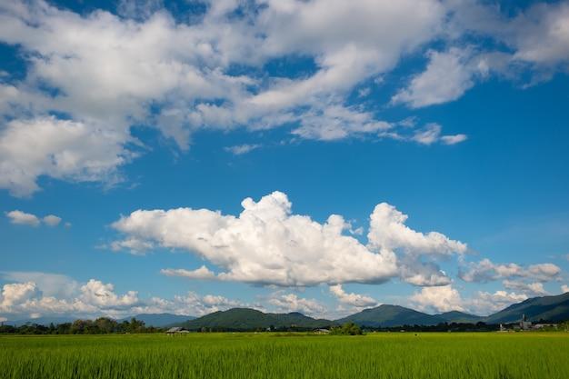 Białe chmury na niebieskim niebie nad zielonym polem i górami