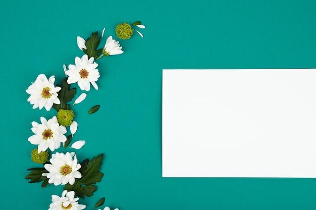 Białe chryzantemy na turkusowej przestrzeni z kopii przestrzenią dla teksta w odgórnym widoku. minimalistyczna koncepcja miłości natury