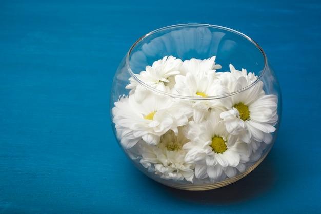 Białe chryzantemy w szklanym wazonie na niebieskim tle. skopiuj miejsce