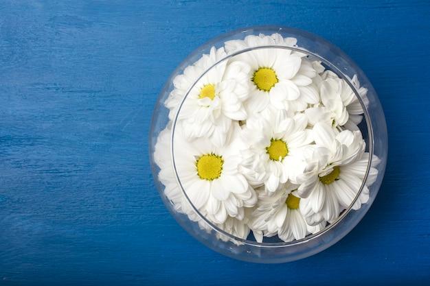Białe chryzantemy w szklanym wazonie na niebieskim tle. widok z góry. skopiuj miejsce