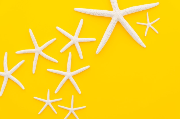 Białe gwiazdy morza na żółtym stole