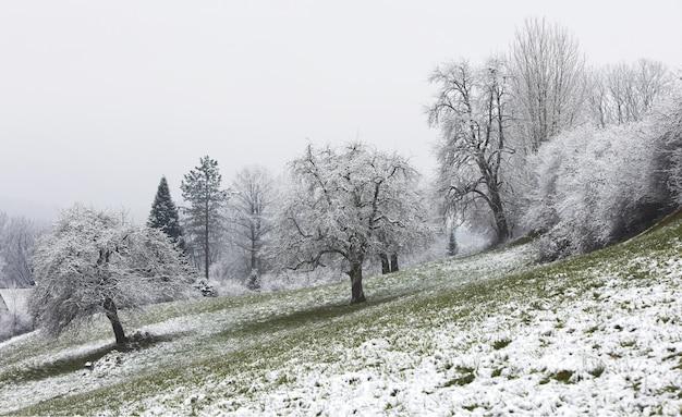 Białe i brązowe drzewo w ciągu dnia