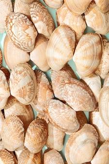 Białe I Miękkie Różowe Muszle Na Miętowym Papierze Lato Wzór Tła Premium Zdjęcia