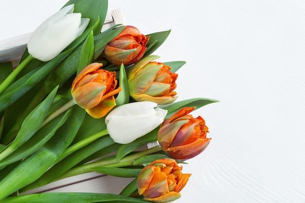 Białe i pomarańczowe tulipany w lekkim drewnianym pudełku. świezi jaskrawi kwiaty z kopii przestrzenią.
