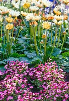 Białe I Różowe Kwiaty Na Zbliżenie Kwietnik W Okresie Wiosennym. Premium Zdjęcia