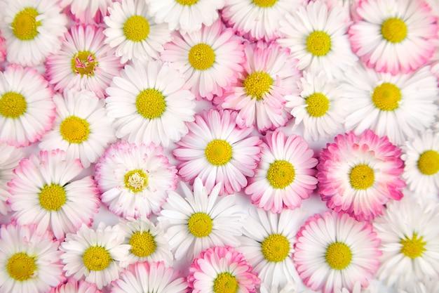 Białe i różowe kwiaty w tle