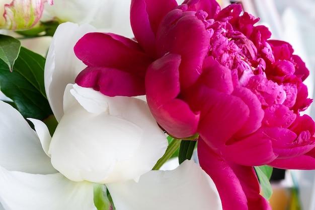 Białe i różowe piwonie na rozmytym tle