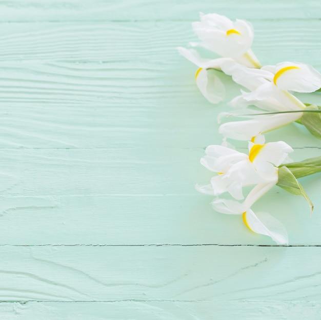 Białe irysy na zielonym tle drewnianych