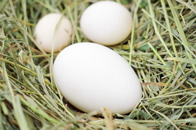 Białe jajka kurze, kaczki, gęsi na świeżym siano. ptasie gniazdo.