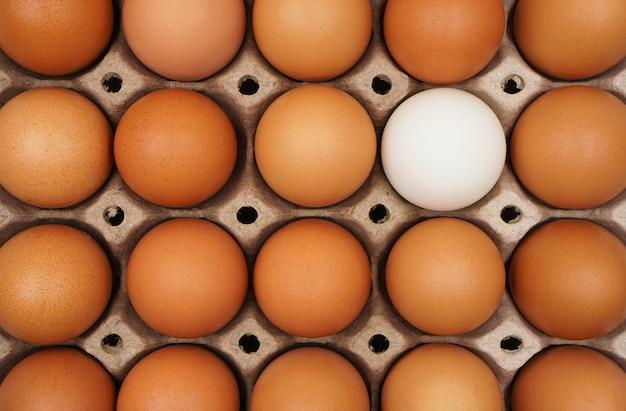Białe jajko wśród brązowych jaj w kartonie