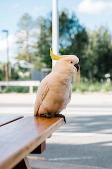 Białe kakadu