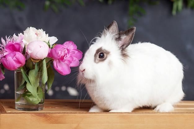 Białe króliki z wiosennymi kwiatami. czas wielkanocy