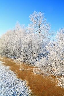 Białe krzewy w czerwonej wodzie