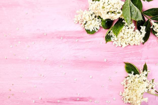 Białe kwiaty bzu czarnego z liśćmi