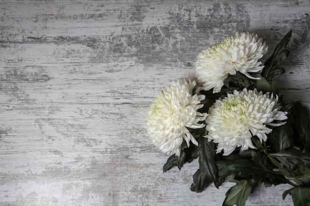 Białe kwiaty chryzantemy na jasnym drewnianym tle