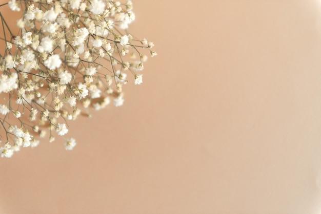 Białe kwiaty gipsówki na beżowym tle kopiuj spce