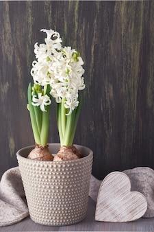 Białe kwiaty hiacyntu w szarym doniczce i drewniane serce w ciemności