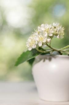 Białe kwiaty jarzębiny z bliska.