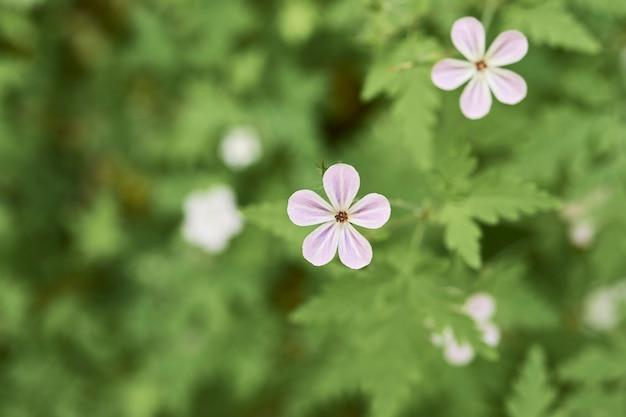 Białe kwiaty jedna nad drugą na zielonym tle