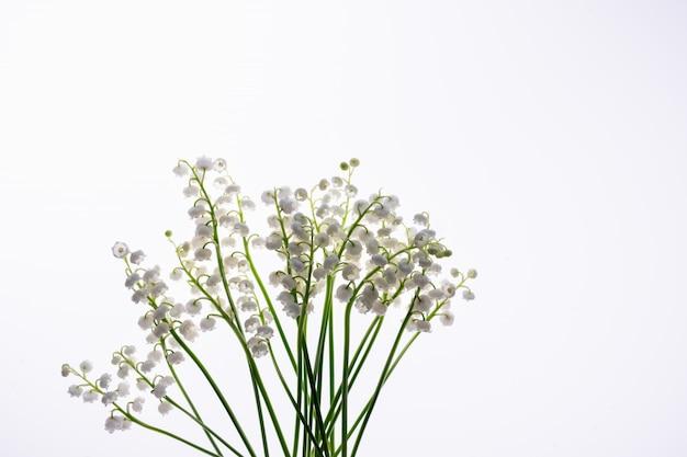 Białe kwiaty konwalie na białym tle. kwiecisty wzór.