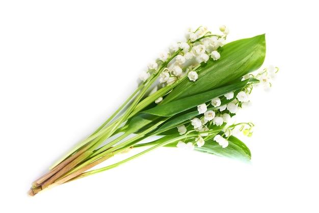 Białe kwiaty konwalie na białym tle