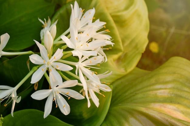 Białe kwiaty kwitną w pięknej przyrodzie w świetle zachodzącego słońca.