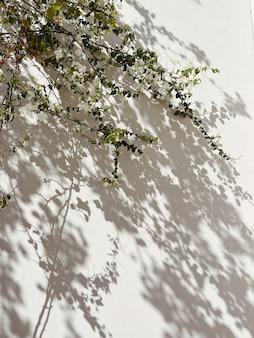 Białe kwiaty, liście i słoneczne cienie na neutralnej beżowej ścianie