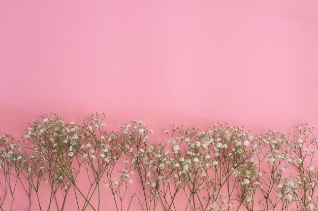 Białe kwiaty łyszczec. gałązki łyszczec na różowym tle. tło wiosna. koncepcja wiosny