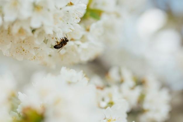 Białe kwiaty na gałęzi