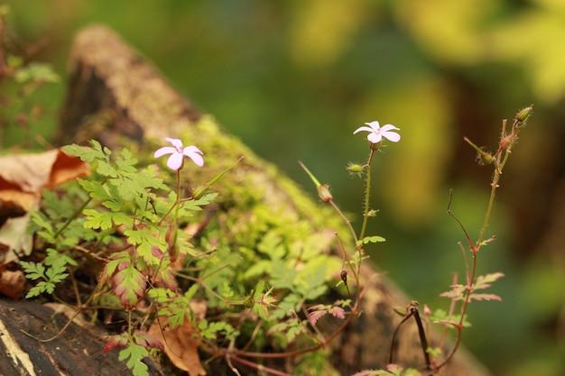 Białe kwiaty obok siebie otoczone zieloną trawą i liśćmi
