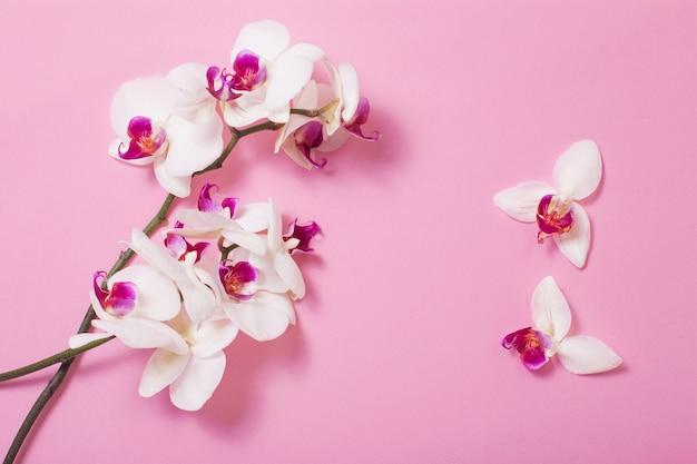 Białe kwiaty orchidei na różowym tle papieru