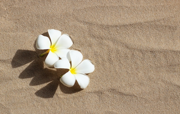 Białe kwiaty plumerii na tle piasku
