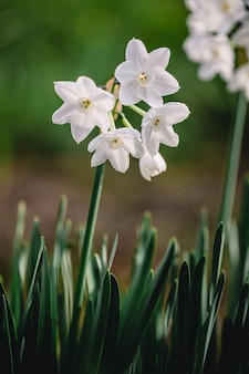 Białe kwiaty płytkiej ostrości