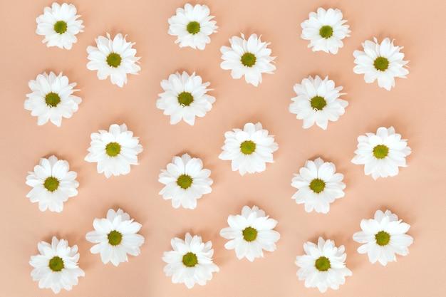 Białe kwiaty stokrotki wzór na beżowym tle koloru