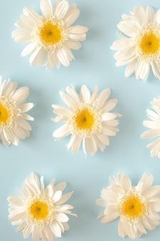 Białe kwiaty ułożone we wzór na niebieskim tle