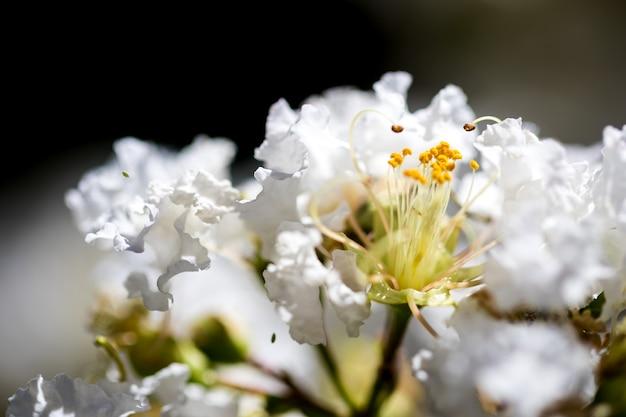 Białe kwiaty z bliska
