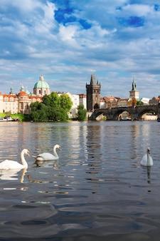 Białe łabędzie na tle mostu karola nad wełtawą, praga, republika czeska