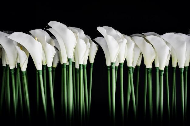 Białe lilie calla