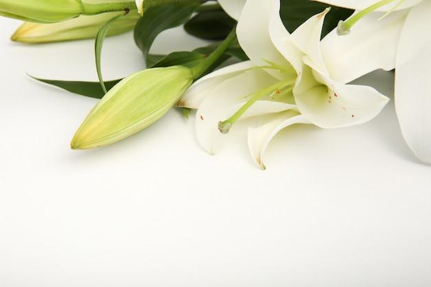 Białe lilie kwiaty na białym tle