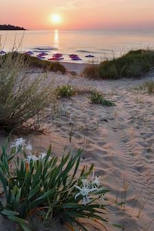 Białe lilie piaskowe na piaszczystej plaży o zachodzie słońca.