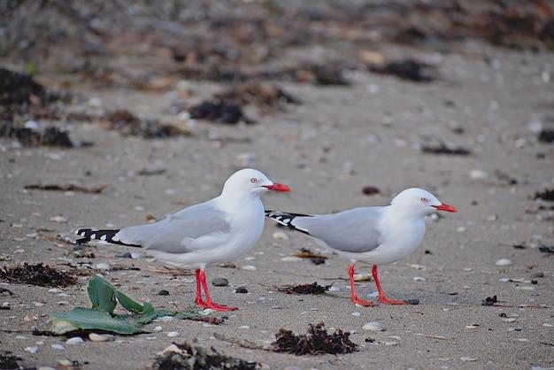 Białe mewy na plaży w ciągu dnia