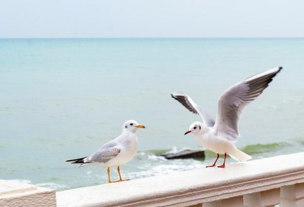 Białe mewy stojące na kamiennym płocie po drugiej stronie morza