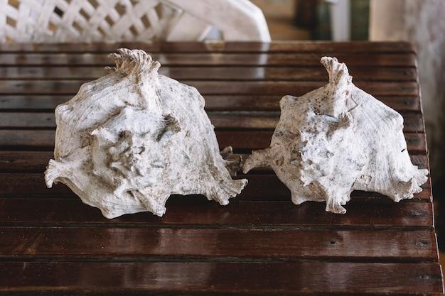 Białe morze skorupy na drewnianym stole.