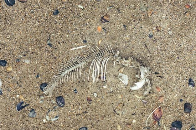 Białe ości ryb na piaszczystym brzegu