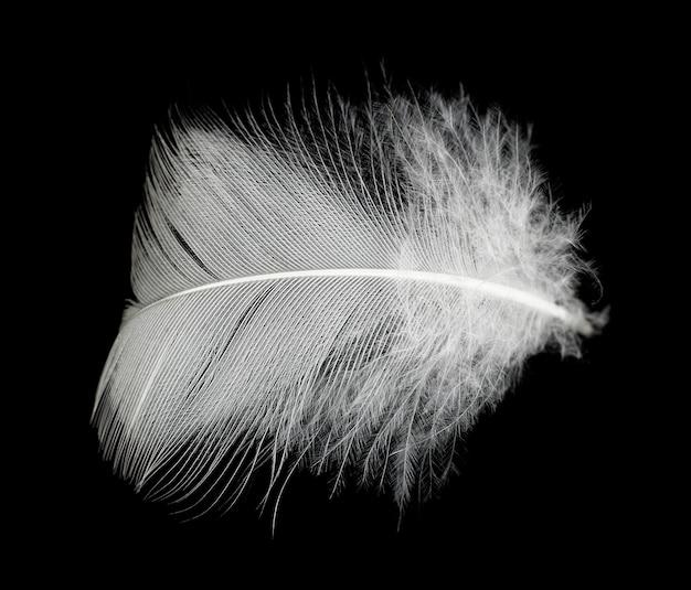 Białe piórko na czarnym tle