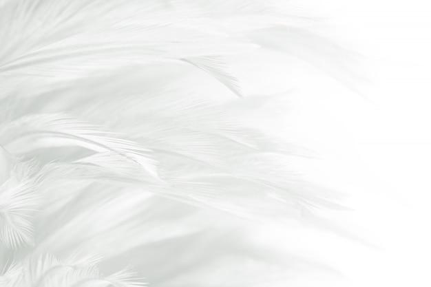 Białe piórko tekstura tło